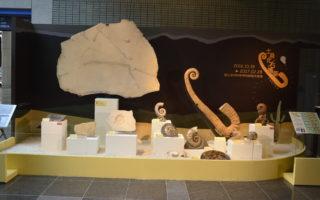 探索古生物演化奥秘 科博馆土桑精品化石展