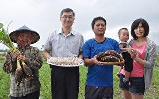 秋季是芋頭的盛產期,青農黃守山(右2)全家總動員,農糧署東區分署副分署長陳吉村(左2)也為他加油打氣。(詹亦菱/大紀元)