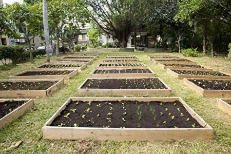 """实践""""一里一可食地景"""" 竹市环保菜园正式启用。(新竹市府提供)"""