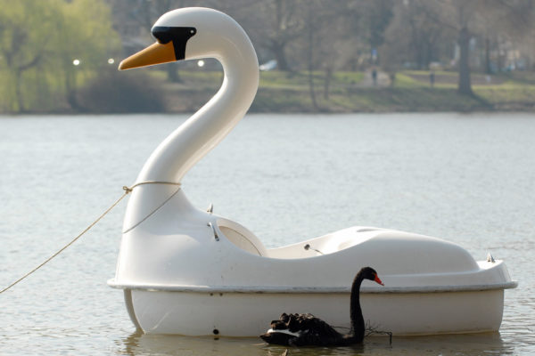 黑天鹅之类的事件,在我们今天的世界上,似乎特别的多。图为2007年德国西北部的Aasee湖中,一只黑天鹅在一艘天鹅型的踏板船旁穿行。(Getty Images)