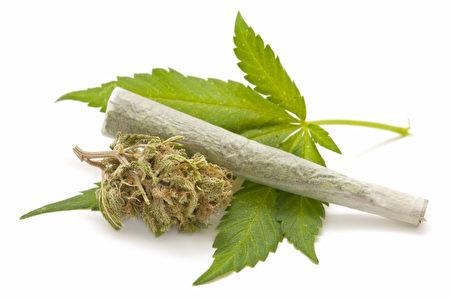 纽约州严禁个人种植大麻,同时药用大麻也只提供胶囊、精油,或酊剂,禁止可抽的大麻。(Fotolia)