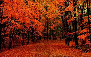 寥落倾城色,无垠火树开。(图片来源:天雪提供)