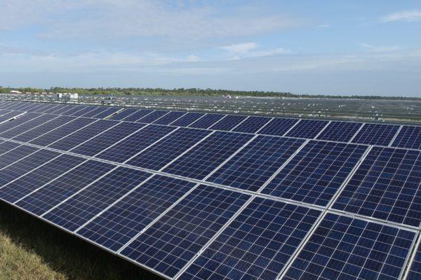 杜克教授王保碩和他的太陽能農場