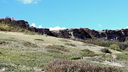 野牛从这个十几米高的悬崖跌落。