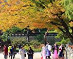 11月初(2日)的韩国首尔昌德宫昌庆宫秋意浓,游客络绎不绝。(全景林/大纪元)