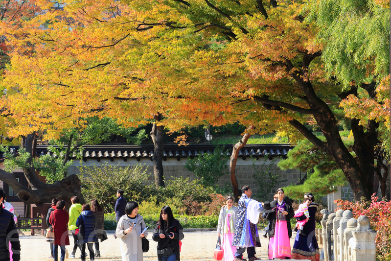 首爾古宮殿美麗秋景 遊客流連忘返