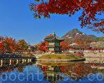 11月初的首尔景福宫美丽的晚秋枫景令人陶醉,心旷神怡。图为景福宫香园亭。(全景林/大纪元)