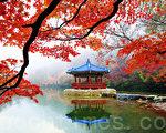 韩国内藏山枫景美如画。位于全罗北道井邑市的内藏山被称为韩国最美丽的枫景区,大约每年11月初为枫叶鼎盛期。图为羽化亭。(全景林/大纪元)