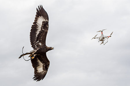 FRANCE-DEFENCE-FALCONRY-DRONES