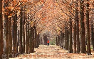 組圖:韓國首爾晚秋風光
