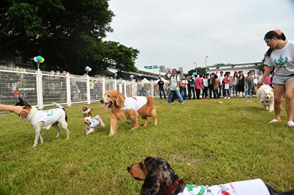 為提供狗狗有更多活動空間,台北市動保處在市民大道與林森北路交叉口的華山公園,規劃台北市第一個公園綠地附設狗活動區,12日正式啟用,每週六、日還安排訓犬師現場教學,為飼主與愛犬提供紓壓健身好去處。(中央社)
