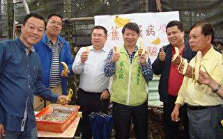 抗香蕉黄叶病有成的陈水木(右)和国际参访团成员边吃香蕉边分享经验。(黄淑贞/大纪元)