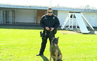 警犬英雄穿背心 出任务安全第一