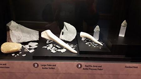 出土的兽骨、石器工具。
