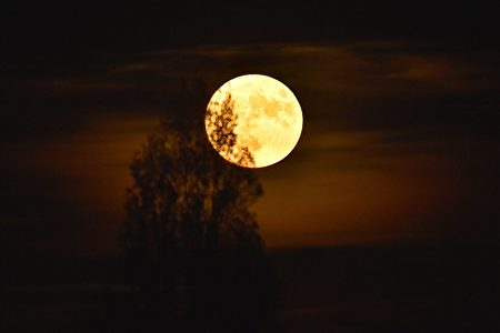 """The """"supermoon"""" rises behind a tree in Vertou, western France, on November 14, 2016. Skygazers took to high-rise buildings, observatories and beaches to get a glimpse of the closest """"supermoon"""" to Earth in almost seven decades. / AFP / LOIC VENANCE (Photo credit should read LOIC VENANCE/AFP/Getty Images)"""