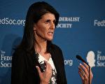 美國媒體透露,美國選總統唐納德·川普將任命南卡羅來納州州長尼基·哈利(Nikki Haley)作為美國駐聯合國大使,(Mark Wilson/Getty Images)