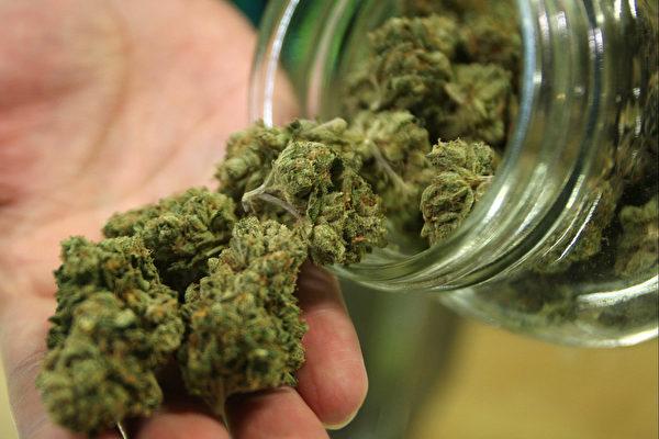 marijuana非药用娱乐性大麻
