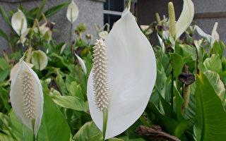 家裡種什麼植物可淨化空氣? NASA告訴你