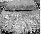 汽车上覆盖了一层黑黑的粉末。(网页截图)