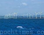 台灣白海豚與離岸風機爭生存權,中央研究院研究員陳昭倫認為,白海豚的未來很悲觀。(游忠霖/大紀元)
