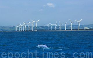 台湾保育挽歌 学者:白海豚未来很悲观