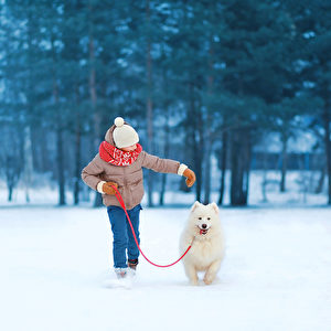 Christmas, winter and people concept - happy teenager boy running and playing with white Samoyed dog outdoors in winter day(shut