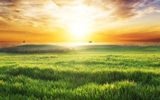 与绿草的领域反对日落天空。(fotolia)