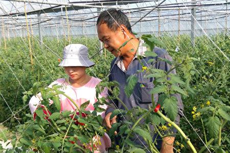 重庆时尚姑娘嫁到台湾成农夫 移民署助行销