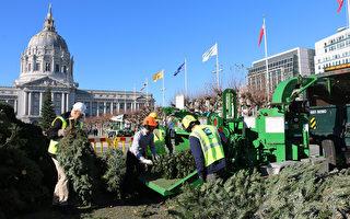 节日过后 旧金山回收圣诞树变能源