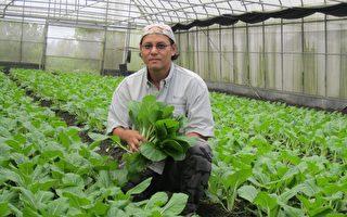 農業縣的屏東,有越來越多從事3C、科技業的年輕人返鄉務農,內埔鄉青農賴恆裕辭掉電腦工程師,返鄉種有機蔬菜。(農糧署南區分署提供)(中央社)