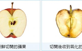 新鲜切开的苹果与切开后受到氧化的苹果。(大纪元制图)