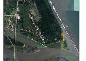 壯圍海灘漂流木 開放宜蘭縣民撿拾