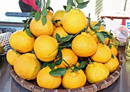三湾稻乡柑香季,黄澄澄的柑橘引人垂涎。 (苗县府/提供)