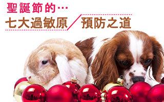 平时身体会出现过敏现象的人,在圣诞节可要多一份小心。(Shutterstock)