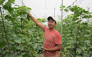 34歲青農陳志偉種植有機瓜類,專業到位,獲得今年百 大青農。 (農糧署南區分署提供/中央社)