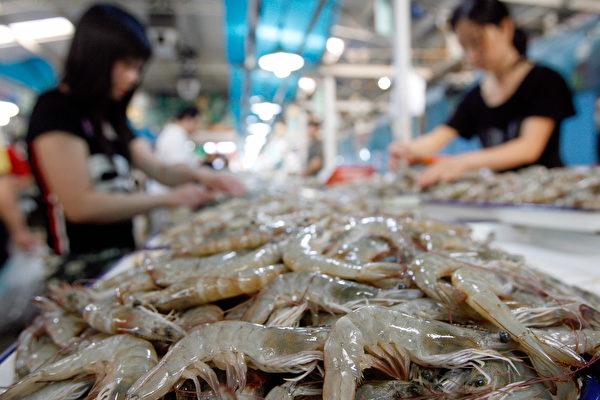 中國是世界上海鮮(包括蝦)出口第一大國,但是它有一個巨大的問題,就是抗生素使用過量,其威脅到全球安全。 (TEH ENG KOON/AFP/Getty Images)