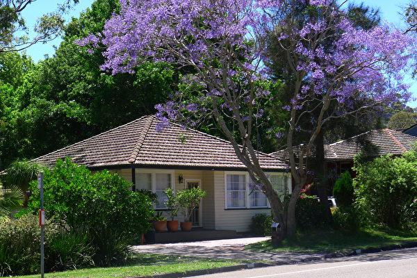 悉尼房主翻修自住房日渐流行