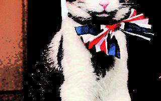 唐宁街宠物内斗 第一猫完胜