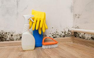 租客被趕走後,安省一房東花了3萬加元做專業清潔和除去動物排泄物留下的惡臭。(Shutterstock)