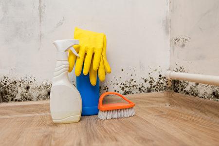 租客被赶走后,安省一房东花了3万加元做专业清洁和除去动物排泄物留下的恶臭。(Shutterstock)