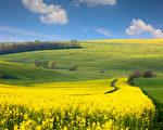 丰富多彩的黄绿色丘陵地面的全景景观(fotolia)