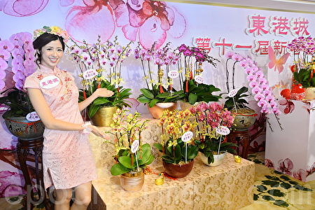 新年將至,市民開始購買年花迎春,「蘭花大王」楊小龍今年引進3款來自日本的新品種蘭花及6款新品種作應市。(宋祥龍/大紀元)