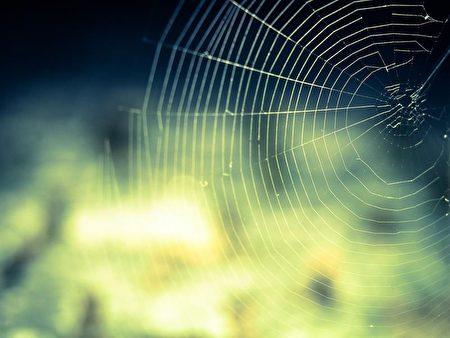 究人员1月9日表示,已成功研发出自然界中最坚韧材质之一的人造蜘蛛丝。此为示意图。(图取自Pixabay图库)