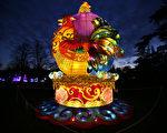 """伦敦西部奇西克庄园""""魔幻灯节"""",公鸡花灯迎接鸡年到来。(DANIEL LEAL-OLIVAS/AFP)"""