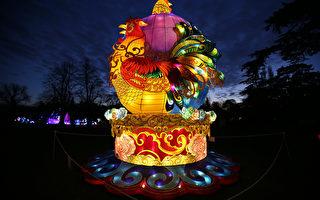 倫敦西部奇西克莊園「魔幻燈節」,公雞花燈迎接雞年到來。(DANIEL LEAL-OLIVAS/AFP)