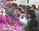 鸡年将至,香港维园年宵市场正式揭幕,大批市民曾假日游花市过新年。(余钢/大纪元)