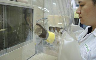 研發團隊在實驗室進行「植物乳桿菌K21」研究。(陽明大學蔡英傑教授提供)