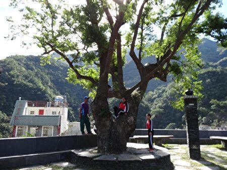 雾台国小体育老师正在讲述祖先们如何爬树的历史,并让学生实际体验。(曾晏均/大纪元)