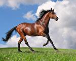 草原駿馬。(Fotolia)