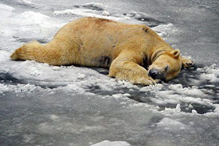 組圖:寒流席捲歐洲各地 至少23死 | 冰雪 | 天氣
